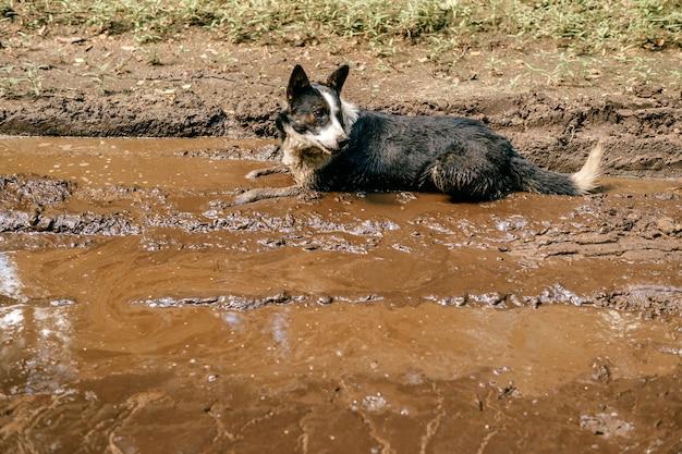Собака лежит в грязных лужах