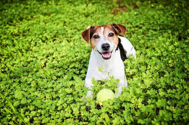 ボールと草の中に横たわる犬