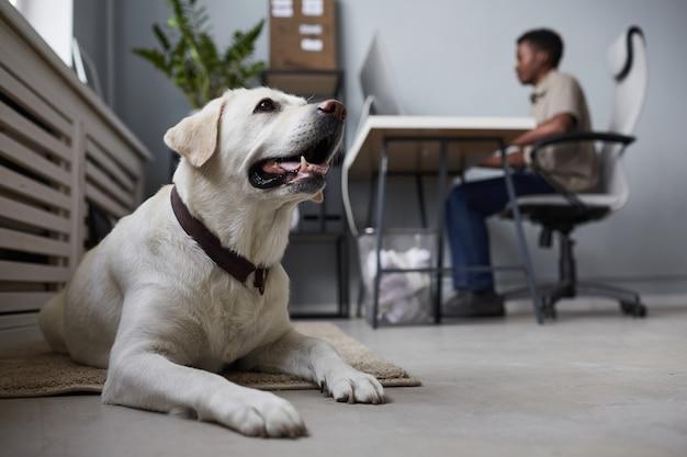 사무실 바닥에 누워 있는 개