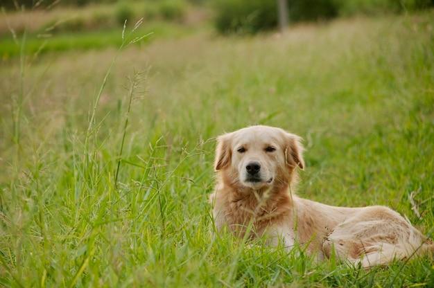 晴れた日に草の上に横たわる犬
