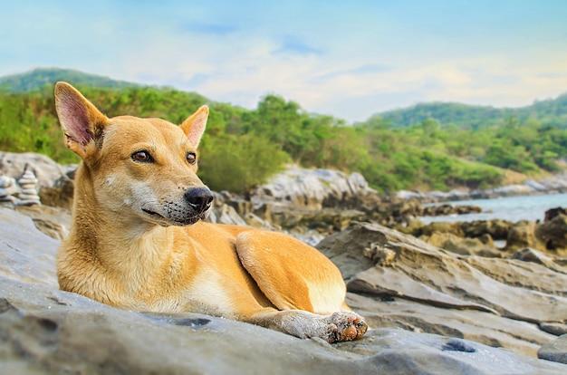 海岸に横たわっている犬