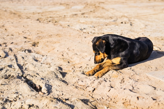 A dog lying on sand at the beach, with sad eyes and wet fur.