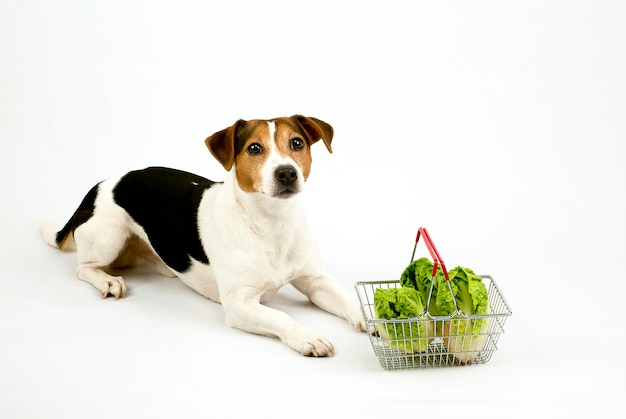 Dog lying with a basket with salad