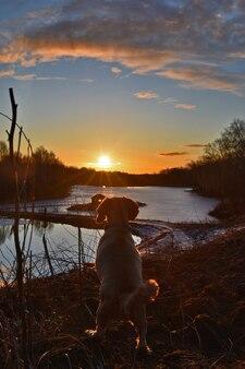犬は湖で夜明けに出会う