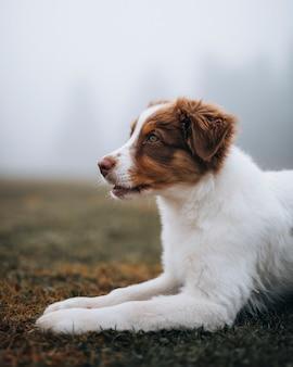 Dog at a misty field