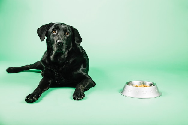 Dog near bowl with food