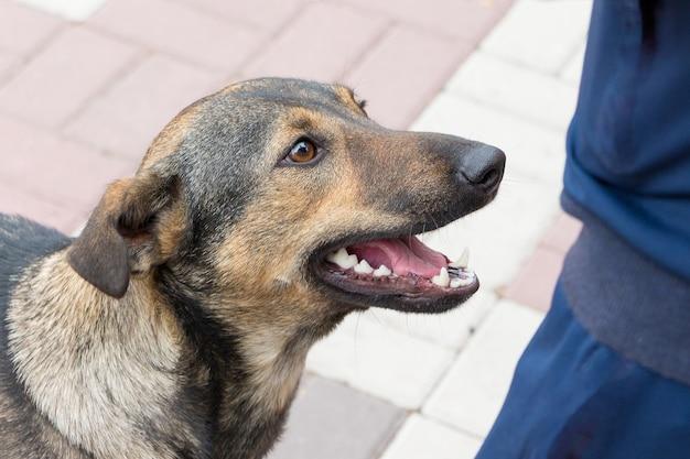 都市公園の少年の近くの犬。人と動物_
