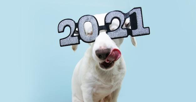 Новый год собаки в очках с надписью