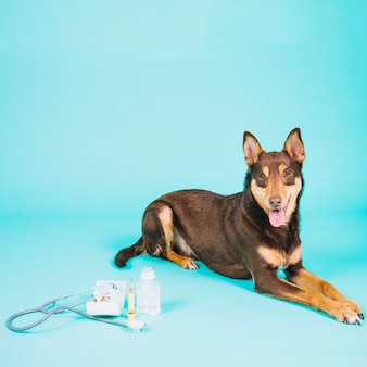 Dog next to veterinary equipment