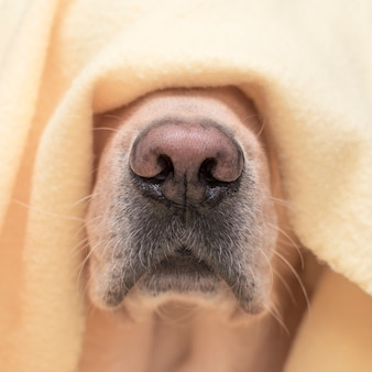 Собака нос крупным планом. понятие комфорта, тепла, осени.