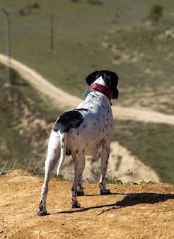 走る前に風景を観察する犬