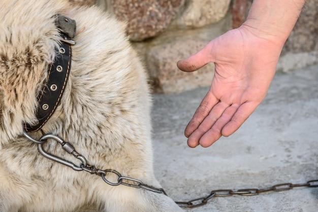 鎖の上の犬は足を与えません。