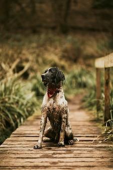 自然の中でハイキング中の犬