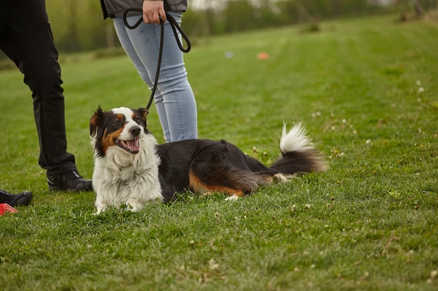 Собака на поводке в парке