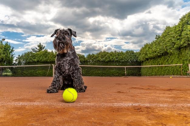 Собака на теннисном корте с мячами.