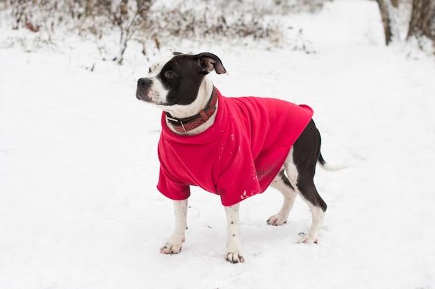 冬の散歩の犬