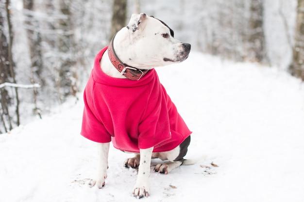 겨울에 산책에 개