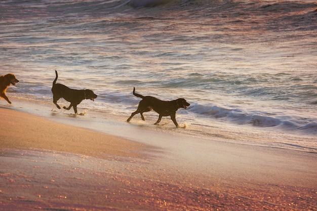 Собака на пляже на острове гавайи