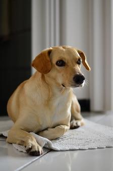 家のベッドの上の犬