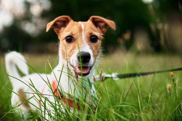 Собака на траве в летний день