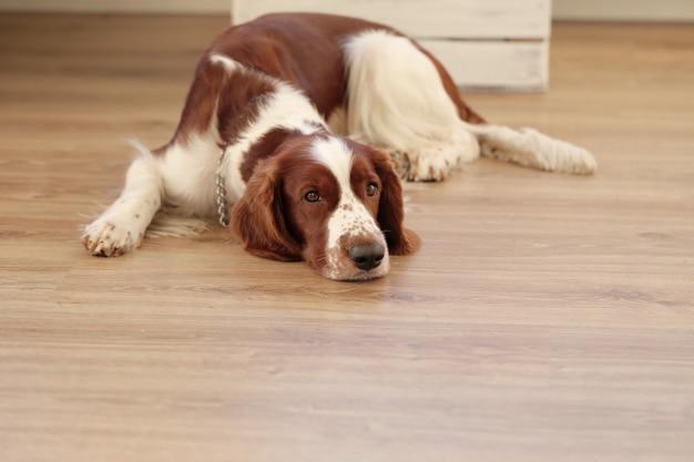 바닥에 개