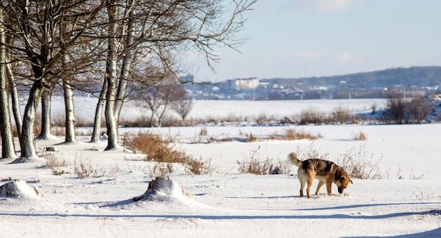 冬の川の近くの森の郊外の犬_