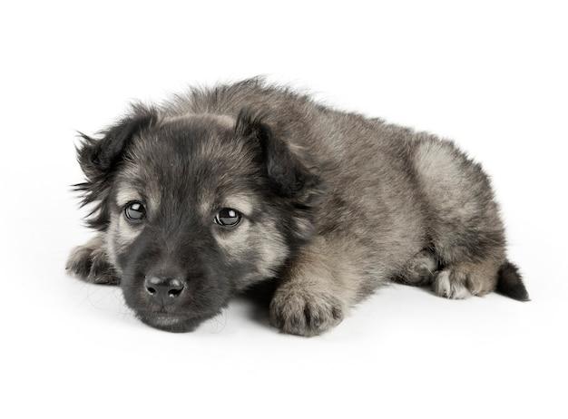 白人の犬 Premium写真