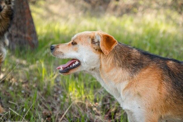 개 또는 애완 동물이 놀고 공원에서 둘러보고 있습니다.