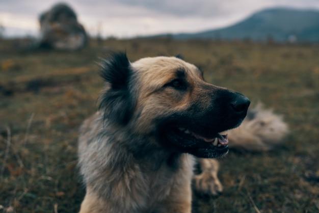 Собака на открытом воздухе в горах лежит в траве отдыха дружбы-путешествия. фото высокого качества