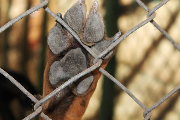 Dog paw against fence