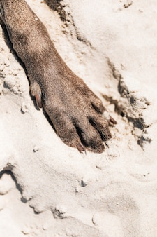 Dog paw in the sand at a beach