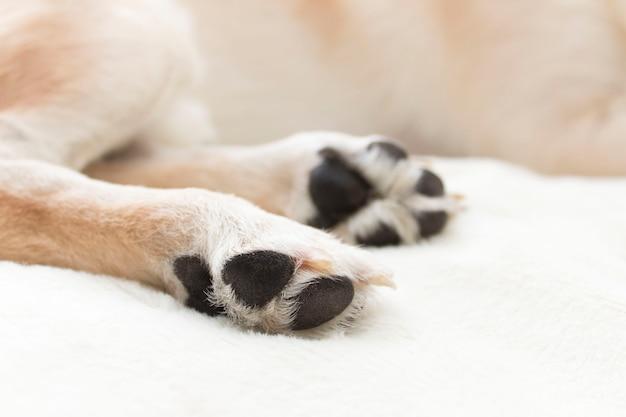 Собачьи лапы, тема ухода за домашними животными.