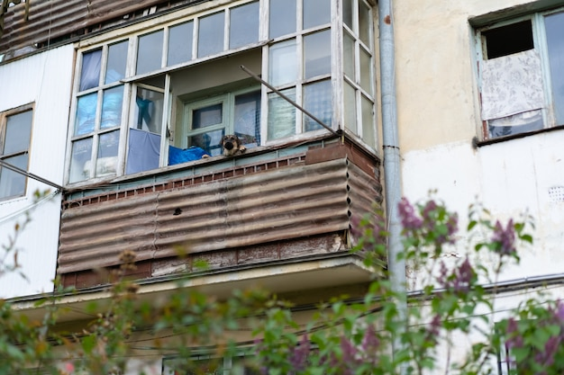 The dog peeks from the balcony of the house