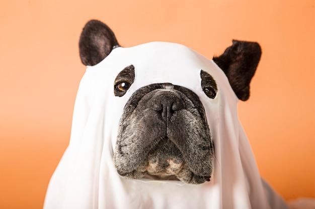 ハロウィーンの犬の写真撮影
