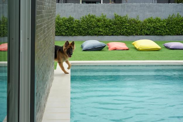 モーションブラーでプールサイド近くで犬の遊び