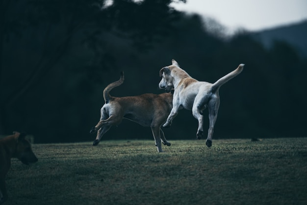 Собака играет на лугах