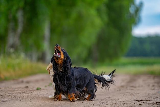 Собака играет на улице. глядя вверх и забегая вперед. предпосылка природы. маленькая порода.