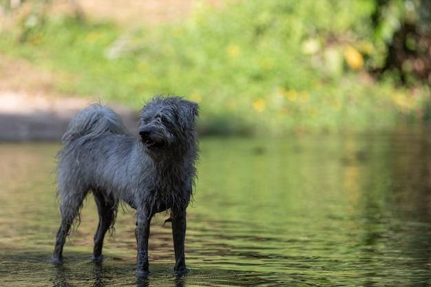 Dog playing water
