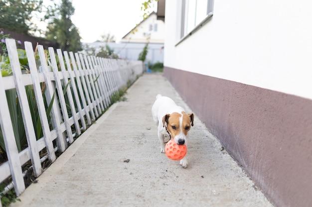 Собака играет с мячом возле дома