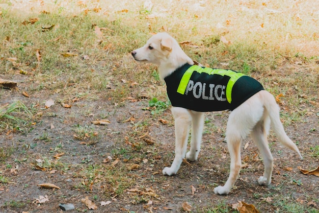 Dog in a police uniform in park.
