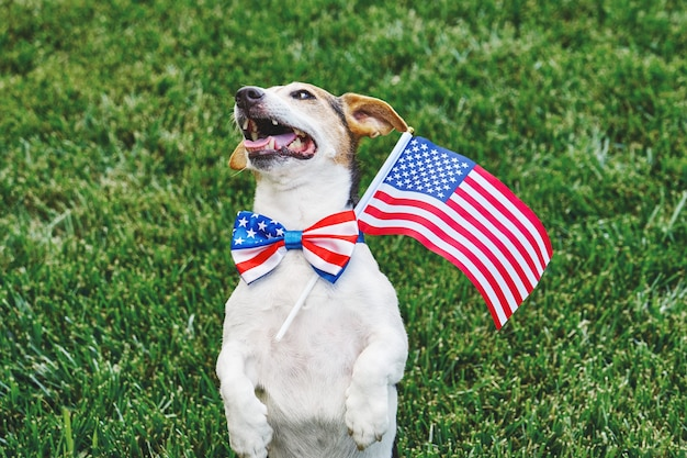Dog posing in american flag bow tie with usa flag on green grasslooking at camera. celebration of independence day, 4th july, memorial day, american flag day, labor day party event
