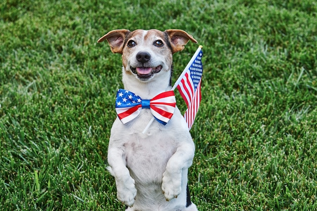 Dog posing in american flag bow tie with usa flag on green grasslooking at camera. celebration of independence day, 4th july, memorial day, american flag day, labor day party event Premium Photo