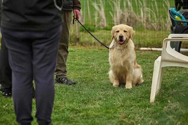 Собачьи бега: собаку перед соревнованиями держат на поводке.