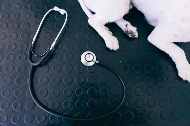 獣医検査の準備ができている犬