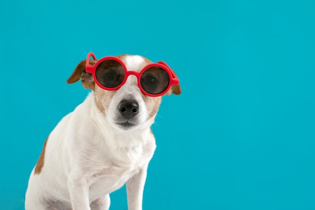 Dog in red sunglasses