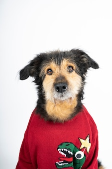 Dog in a red sweater and christmas hat