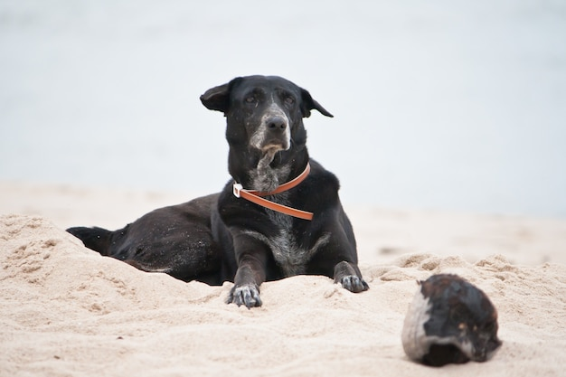 Dog relaxing on beach sand