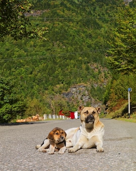 Dog relaxing on the empty road with her adorable puppy