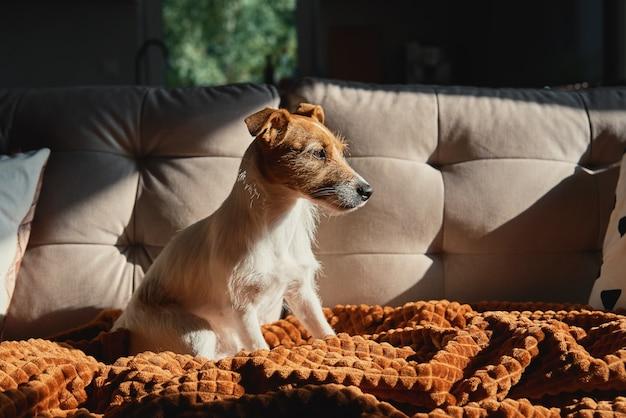 Собака отдыхает на диване под одеялом