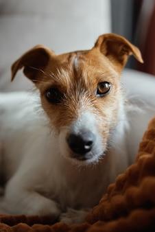 Собака отдыхает на кровати и смотрит в камеру
